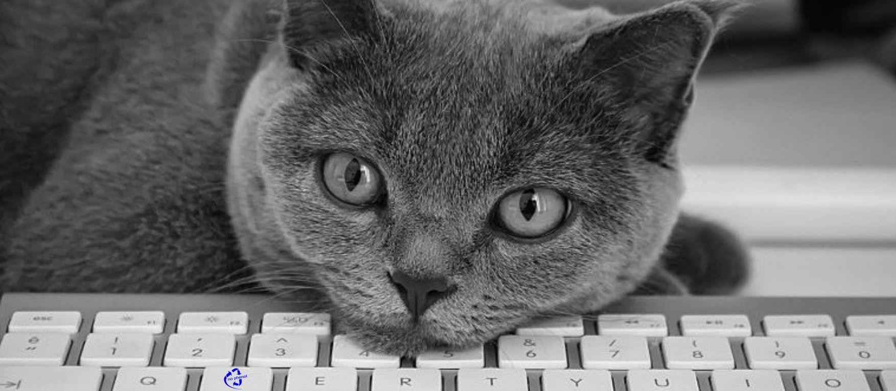 kat toetsenbord bureau tssbelgium
